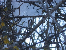 Luce tra la neve